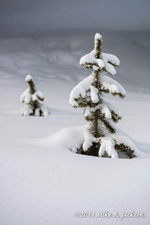 Web Tree Tops Jan12