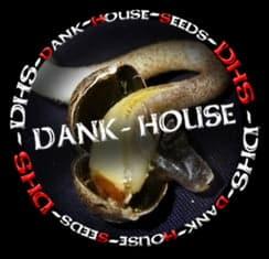 dank house seeds