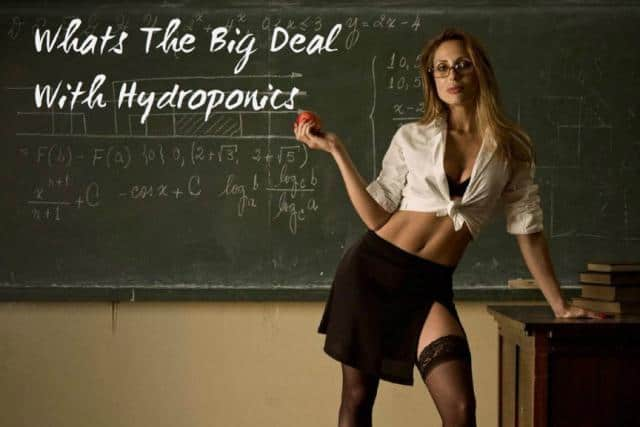 Whats The Big Deal With Hydroponics?