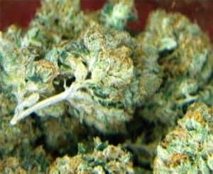 og-kush-medical-marijuana
