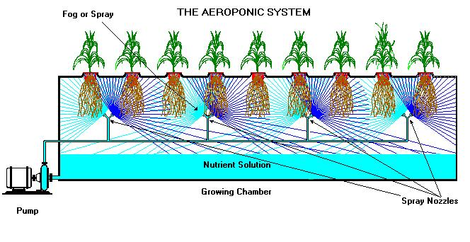 Aeroponics: exactly what is an aeroponic system and how does it work?
