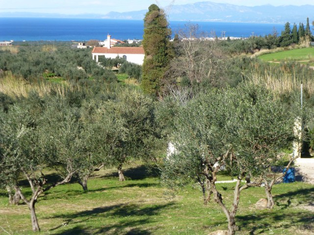 Olive Tree Pruner Extraordinaire - 13