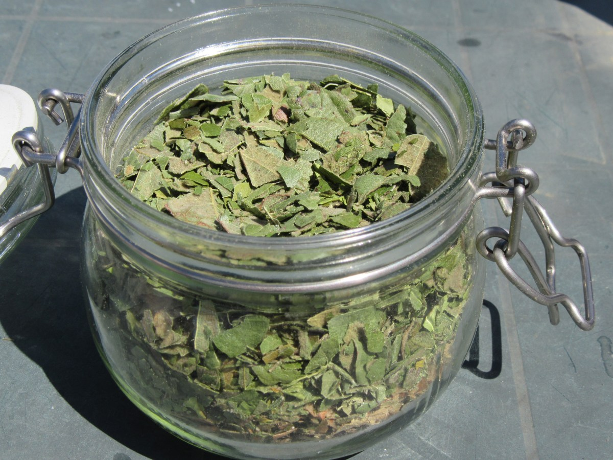 Photo of glass jar full of nespera leaf tea