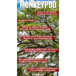 Small Crop Of Monkey Pod Tree