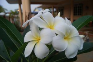 Sekuntum bunga itu