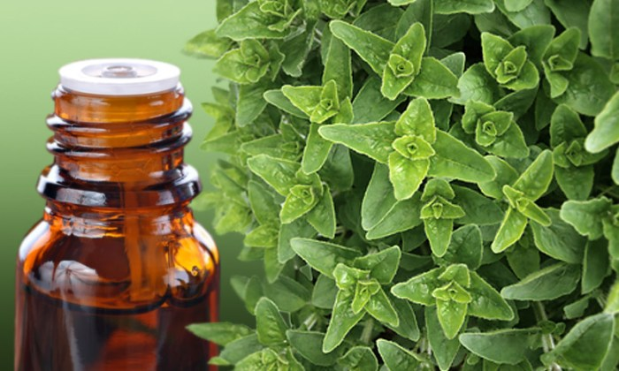 Oregano-Oil-and-Bottle