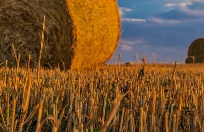 Bioecogeo_agricoltura