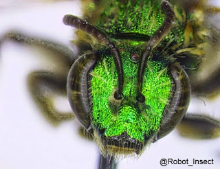 Better Know a Scientist: Entomologist Amelia Jordan
