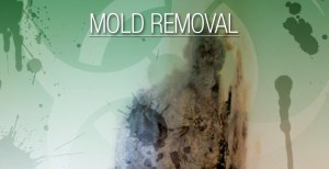 Mold Removal America