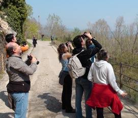 Out birding near Montsonís