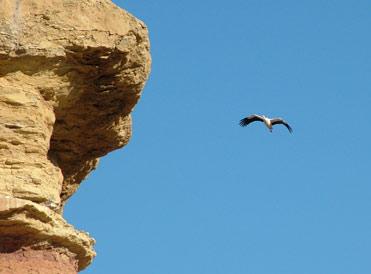 White stork in Spain.