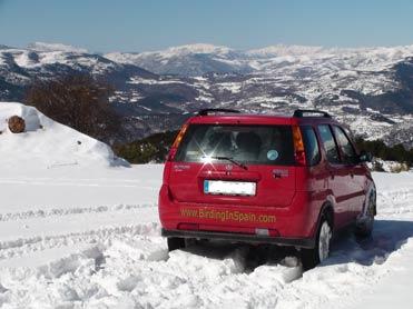 Birding in Spain in the snowy Pyrenees.