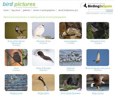 Birdpictures.pro