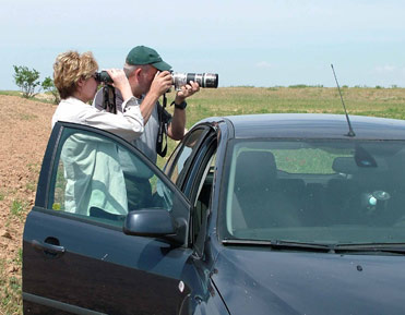 Birding from the car is a possibility when birding in Spain