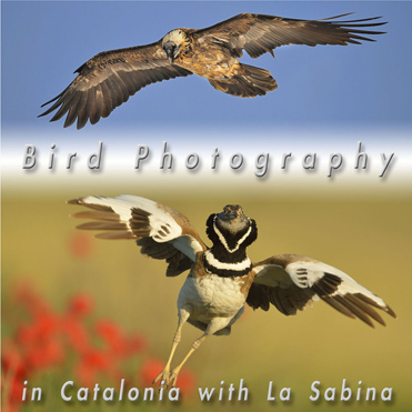 New hide photography brochure now available