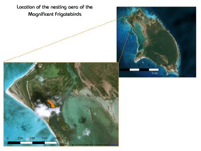 Map-Location of nesting area on Barbuda-Codrington Lagoon
