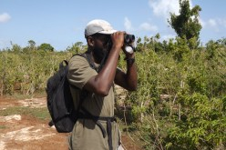 Lenn spotting another Barbuda Warbler (Photo by Sophia Steele)
