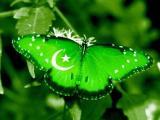 jashne azad pakistan pic
