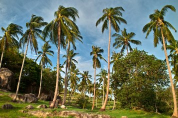 Palmenplantagen.