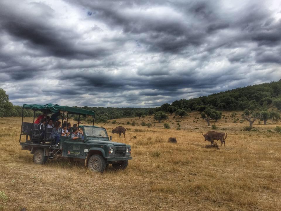 Éxito de los safaris de Paleolítico Vivo en Atapuerca