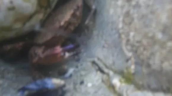 Der AquaPi macht keine überzeugenden Bilder (Quelle: raspberrypi.org)