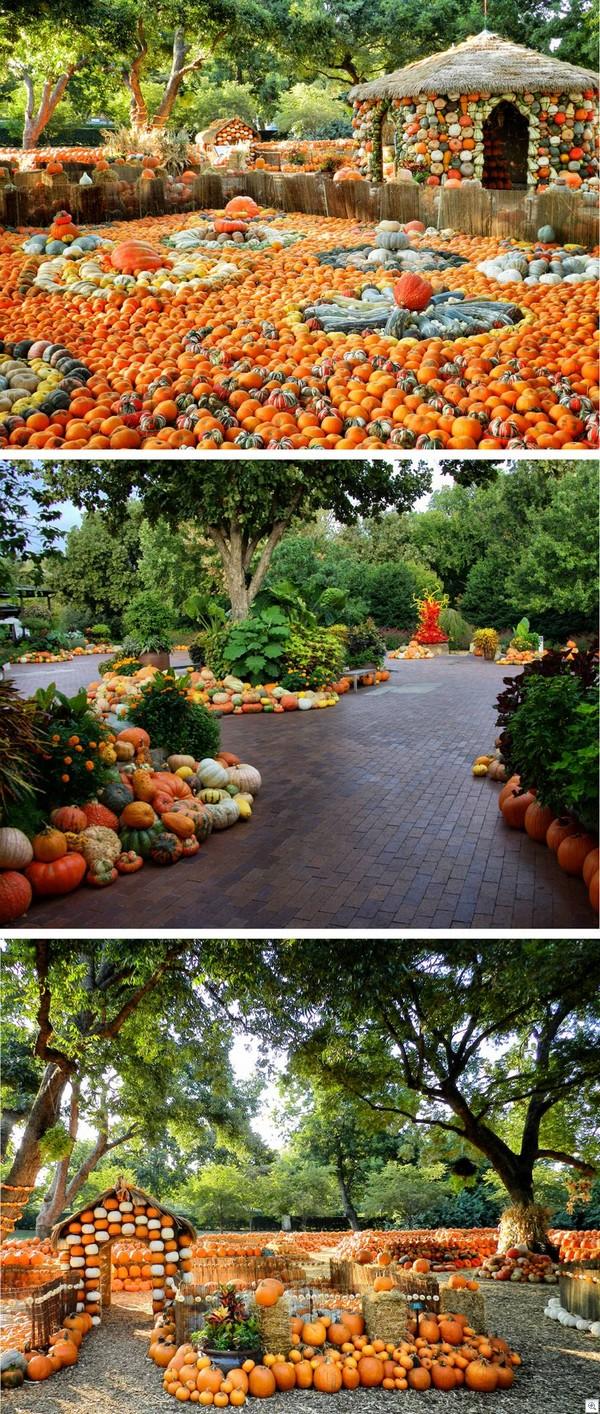 Pumpkin land1