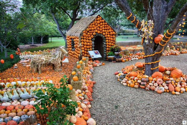 Pumpkin land4