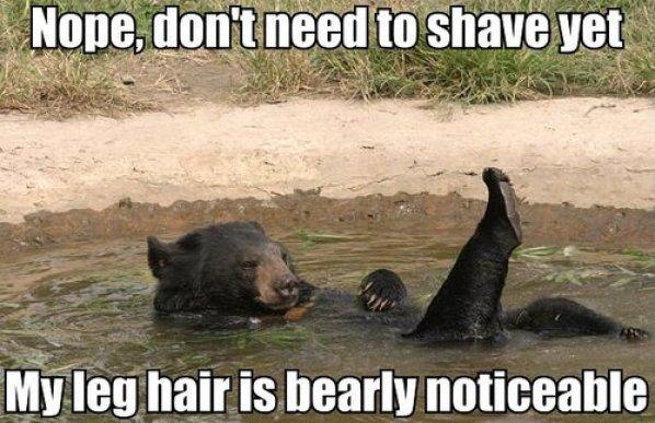 Bear shave