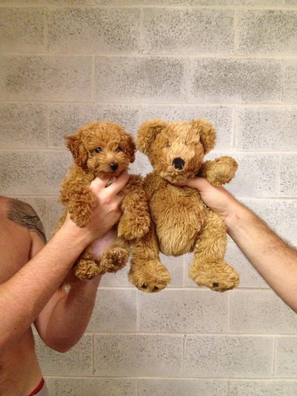 Puppy or Teddy Bear