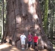 Big ass tree