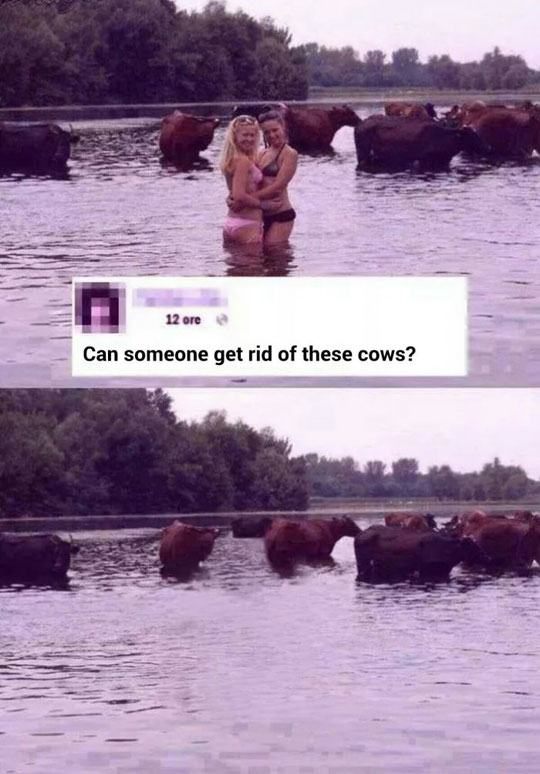 Cow removal