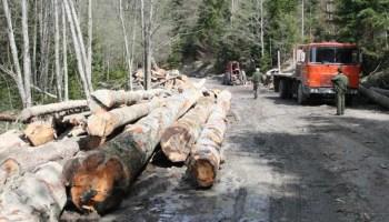 Se fură ca-n codru din păduri: pagube de peste 20.000 de lei, într-o lună şi jumătate