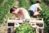 Spaniolii au nevoie de 800 de căpșunari și oferă un salariu brut de 40,15 euro pe zi