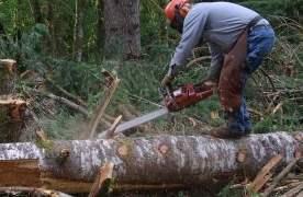 Râșnovul taie 647 de mc de lemn din pădurile sale