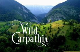 VIDEO Seria Wild Carpathia, cele mai frumoase documentare despre România