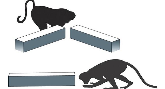 maymunlar-da-neyi-bilmediklerini-biliyorlar-bizsiziz
