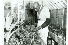 Carver in greenhouse at Tuskegee Institute, circa 1935