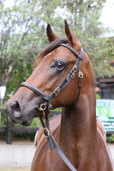 2015 Fully Fledged / Dee Flawless colt