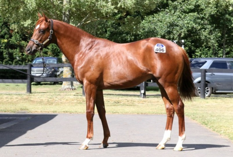 2015 Dawn Approach (IRE) / Shower of Roses (GB) colt