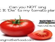 final-meme-tomato