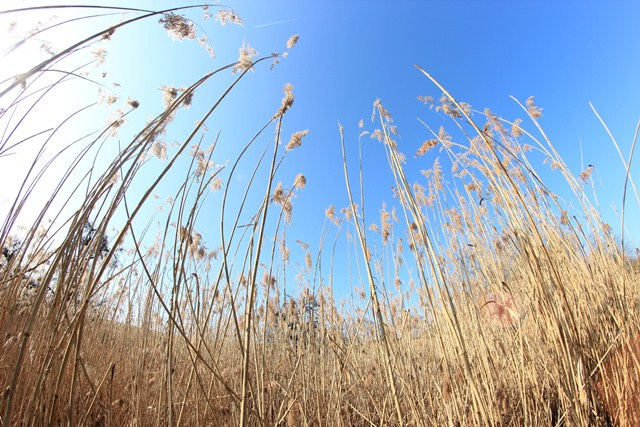 Fish-Eye in the wild (by Benno)