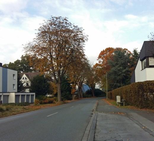 An der Sunderner Straße soll jetzt endlich die langgeforderte Querungshilfe kommen. Die Bushaltestelle Haus Tanneck soll dafür zum Buskap umgebaut oder mit der haltestelle Austfeld zusammengelgt werden. (Foto: oe)