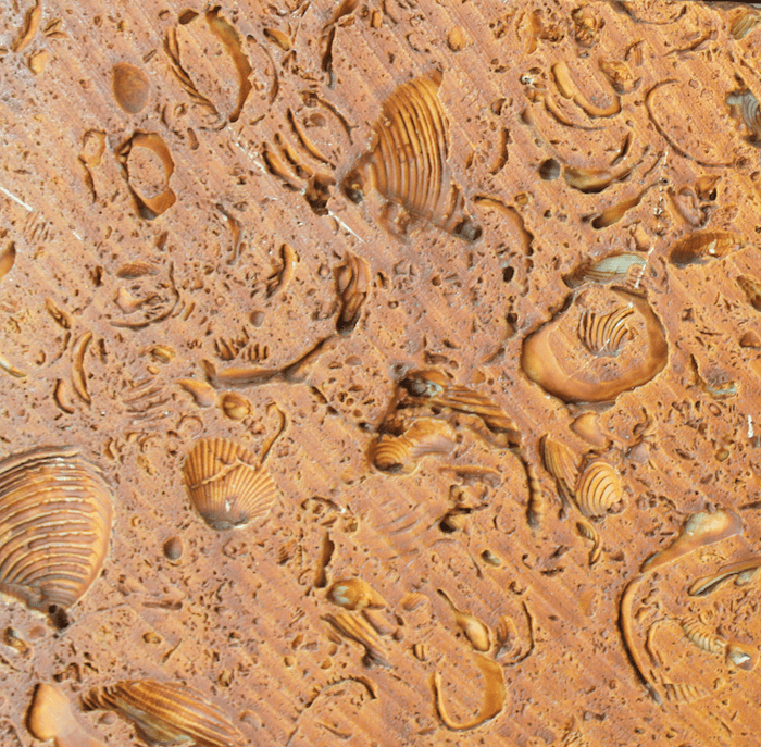 fossils embedded in walls of hotel in the Mayan Riviera