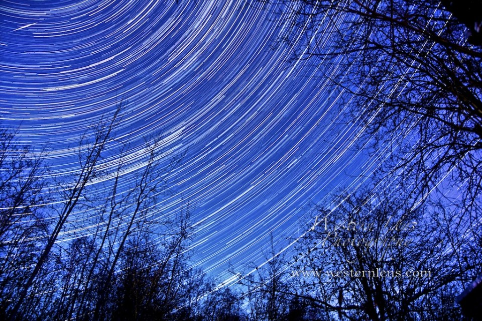 stars spinning over trees