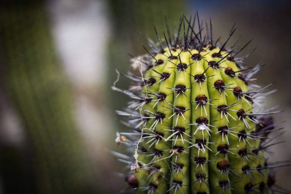 Baja, Mexico, cactus