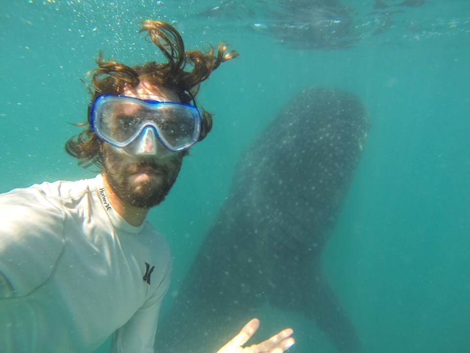 Swimming with whale sharks a dinghy ride away