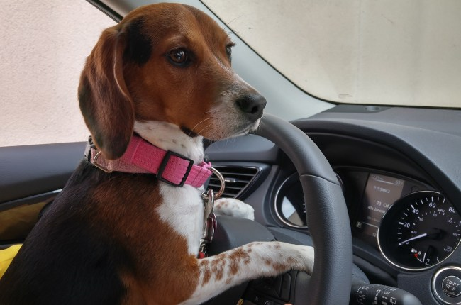 Puppy Driving
