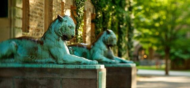 Tigres de Princenton.