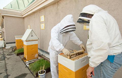 Fairmont DC beehives