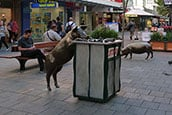 Rundle mall small